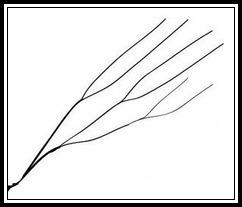 সমান্তরাল জলনির্গম প্রণালী (Parallel Drainage Pattern)